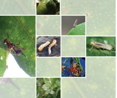 Citrus Pests and Disease Management Manual published